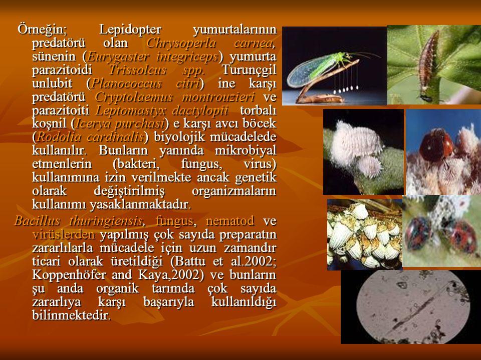 Örneğin; Lepidopter yumurtalarının predatörü olan Chrysoperla carnea, sünenin (Eurygaster integriceps) yumurta parazitoidi Trissolcus spp. Turunçgil unlubit (Planococcus citri) ine karşı predatörü Cryptolaemus montrouzieri ve parazitoiti Leptomastyx dactylopii torbalı koşnil (Icerya purchasi) e karşı avcı böcek (Rodolia cardinalis) biyolojik mücadelede kullanılır. Bunların yanında mikrobiyal etmenlerin (bakteri, fungus, virus) kullanımına izin verilmekte ancak genetik olarak değiştirilmiş organizmaların kullanımı yasaklanmaktadır.
