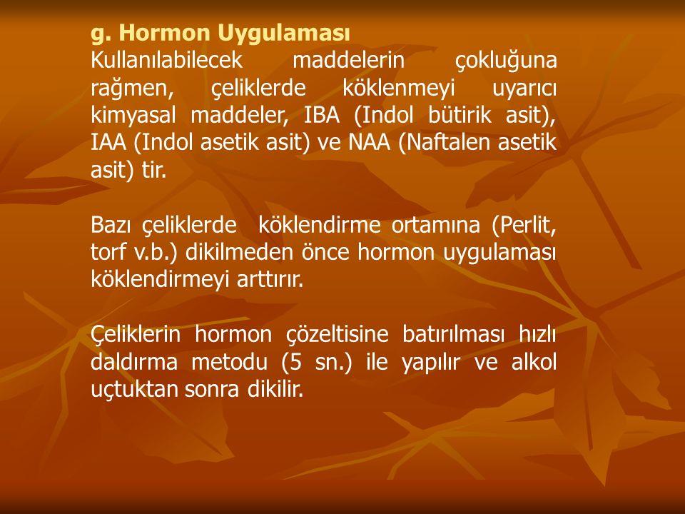 g. Hormon Uygulaması