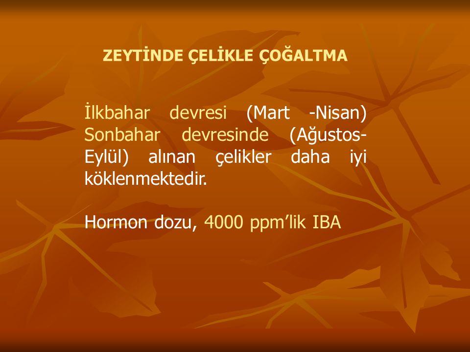 Hormon dozu, 4000 ppm'lik IBA
