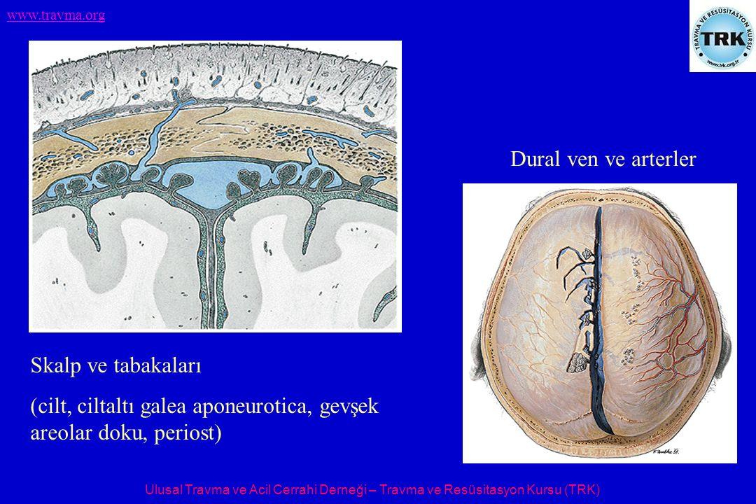 Dural ven ve arterler Skalp ve tabakaları.