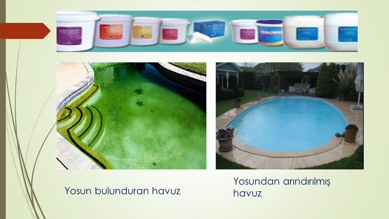 Yosun bulunduran havuz
