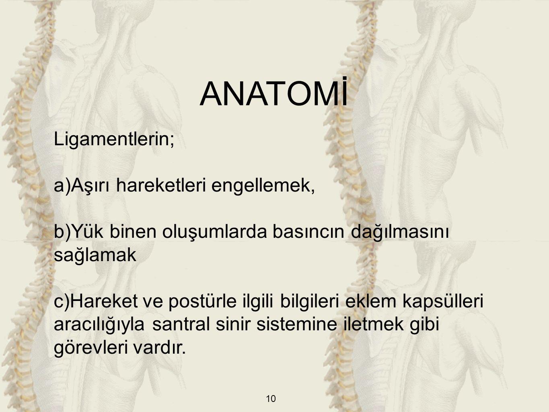 ANATOMİ Ligamentlerin; Aşırı hareketleri engellemek,