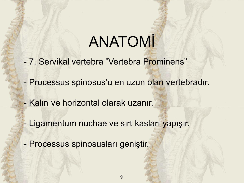ANATOMİ - 7. Servikal vertebra Vertebra Prominens