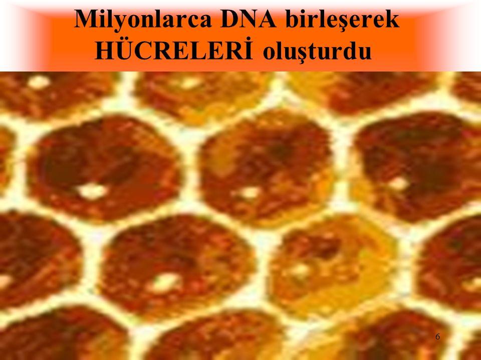 Milyonlarca DNA birleşerek HÜCRELERİ oluşturdu
