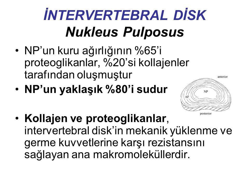 İNTERVERTEBRAL DİSK Nukleus Pulposus