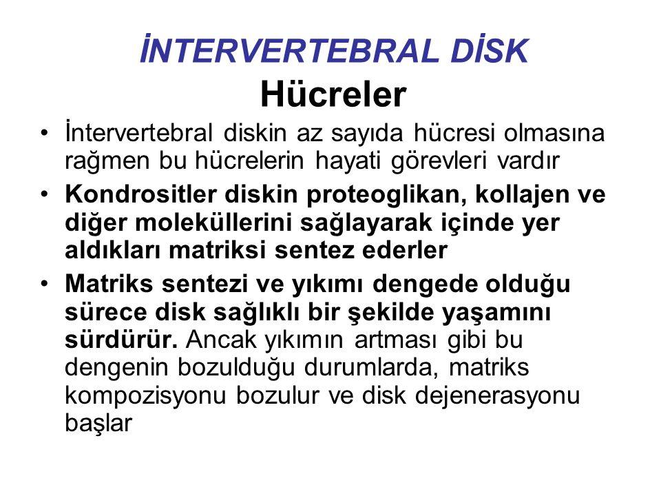İNTERVERTEBRAL DİSK Hücreler