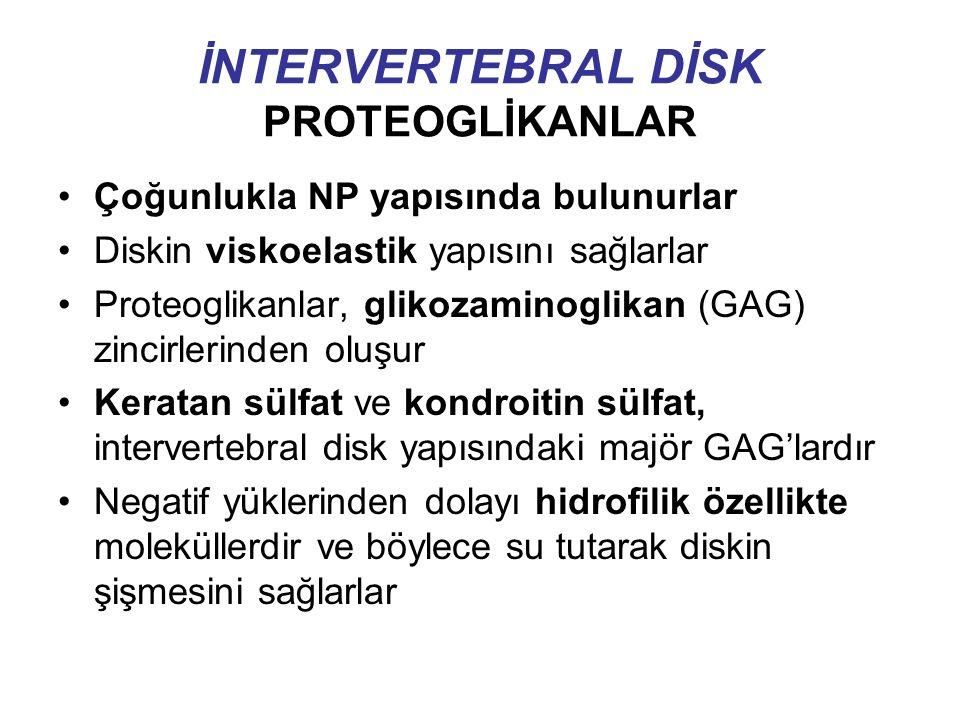İNTERVERTEBRAL DİSK PROTEOGLİKANLAR