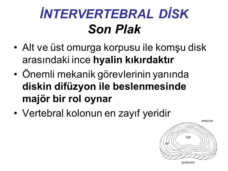 İNTERVERTEBRAL DİSK Son Plak