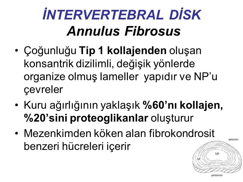 İNTERVERTEBRAL DİSK Annulus Fibrosus