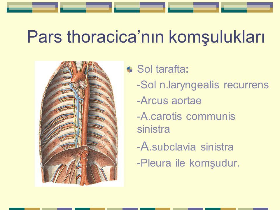 Pars thoracica'nın komşulukları