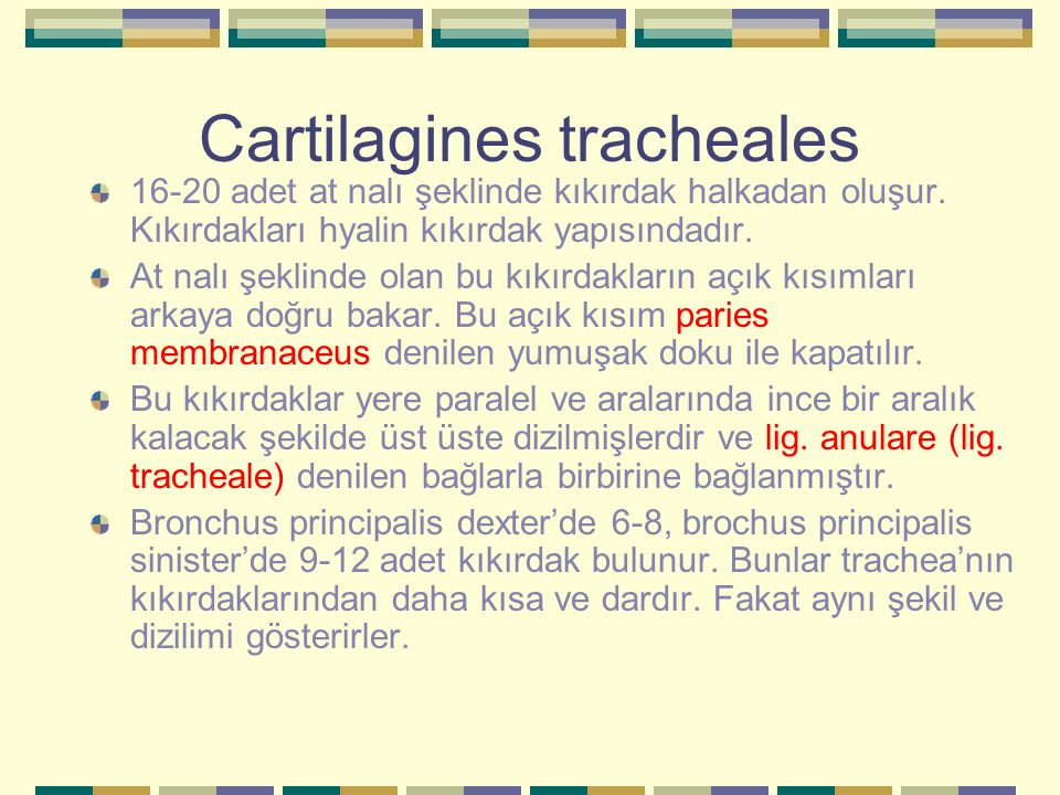 Cartilagines tracheales