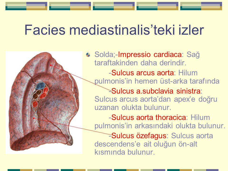 Facies mediastinalis'teki izler
