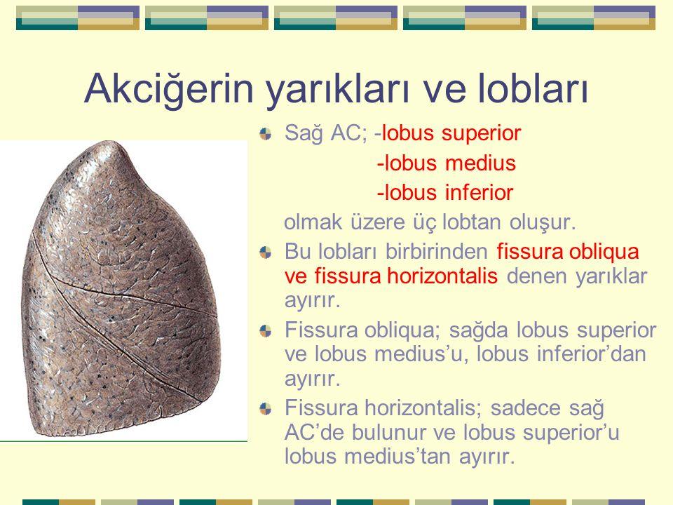 Fissura Obliqua ~ Am Besten Inspirierend über Frisur