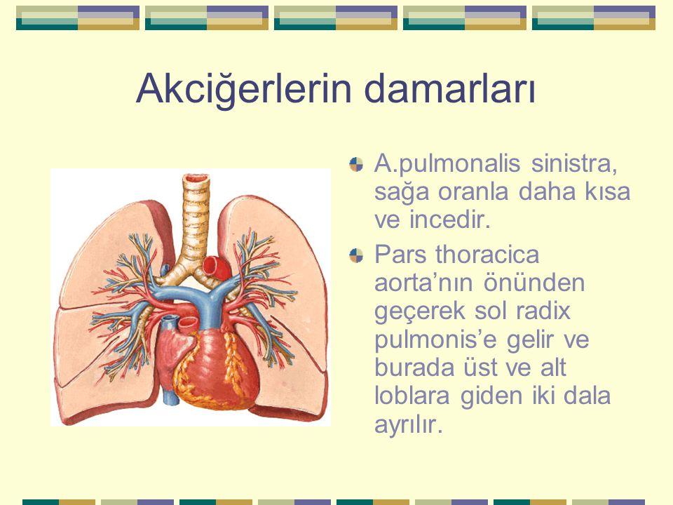 Akciğerlerin damarları