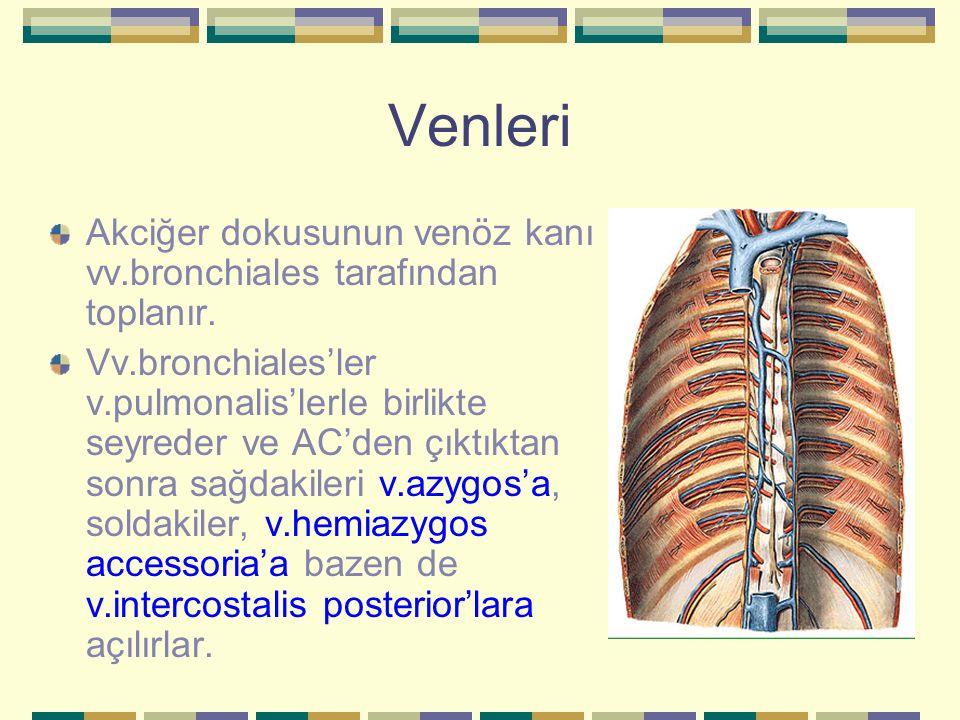 Venleri Akciğer dokusunun venöz kanı vv.bronchiales tarafından toplanır.