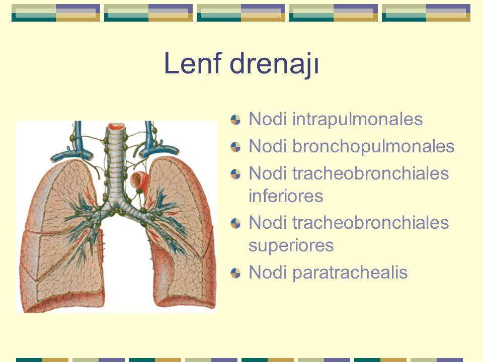 Lenf drenajı Nodi intrapulmonales Nodi bronchopulmonales