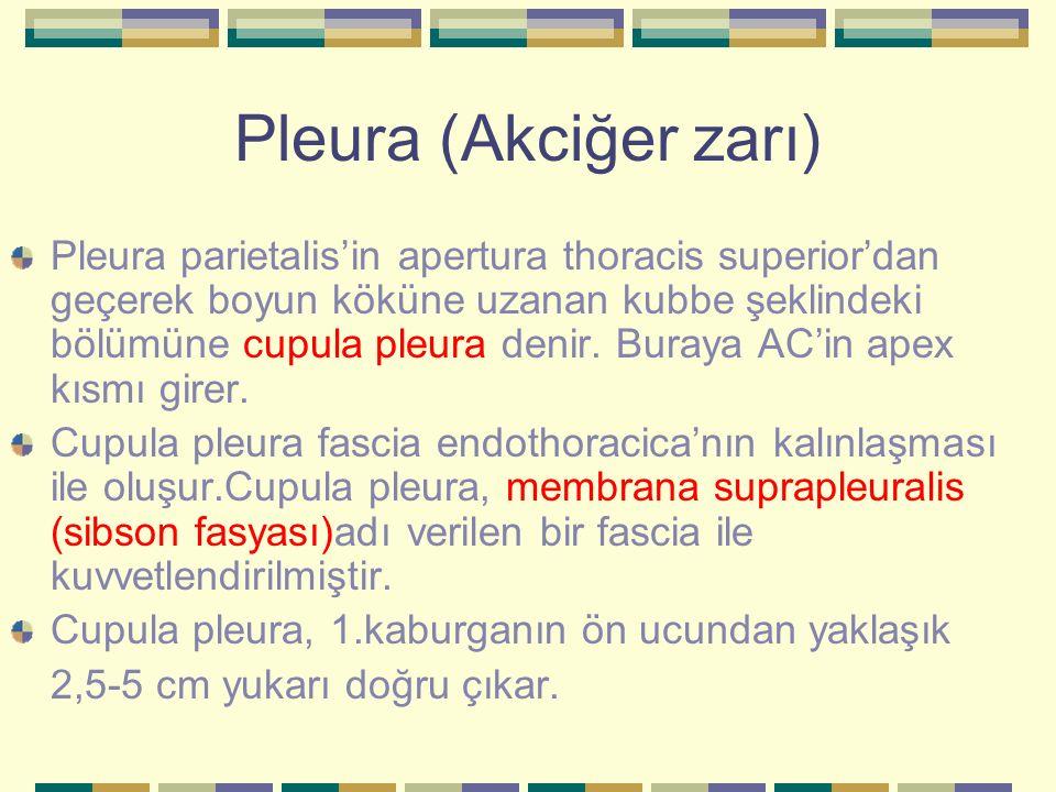 Pleura (Akciğer zarı)