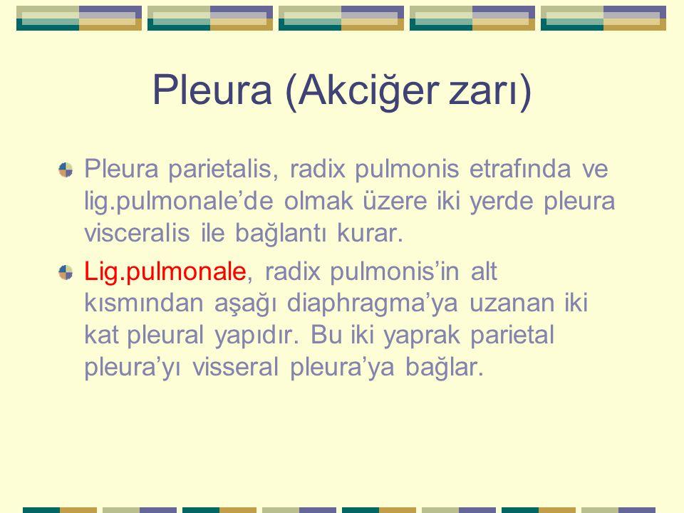 Pleura (Akciğer zarı) Pleura parietalis, radix pulmonis etrafında ve lig.pulmonale'de olmak üzere iki yerde pleura visceralis ile bağlantı kurar.