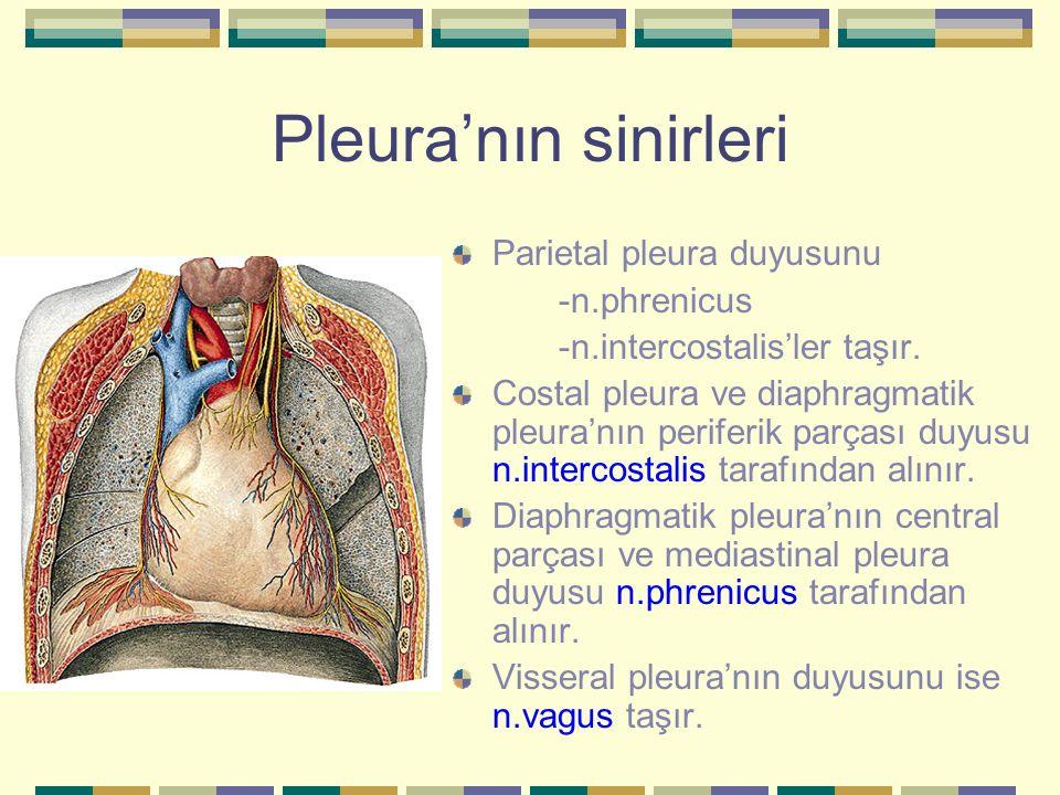Pleura'nın sinirleri Parietal pleura duyusunu -n.phrenicus