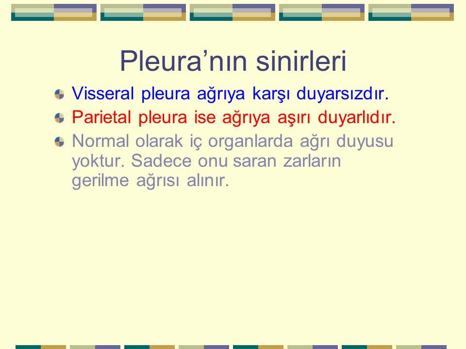 Pleura'nın sinirleri Visseral pleura ağrıya karşı duyarsızdır.