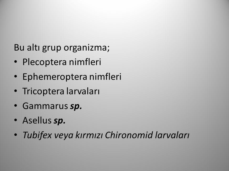 Bu altı grup organizma;