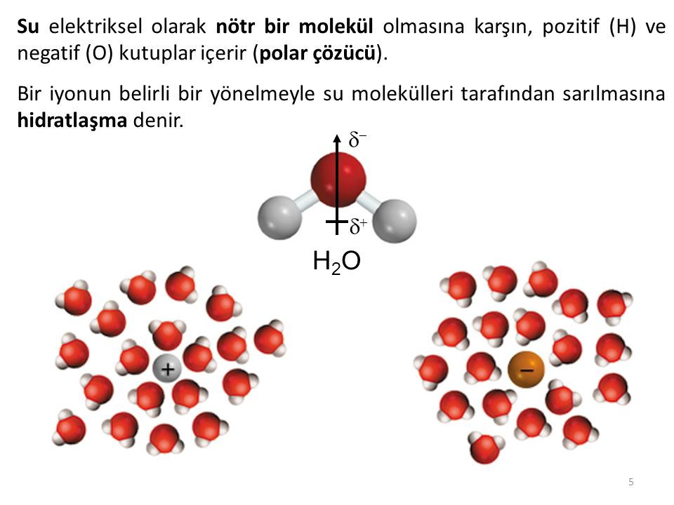 Su elektriksel olarak nötr bir molekül olmasına karşın, pozitif (H) ve negatif (O) kutuplar içerir (polar çözücü).