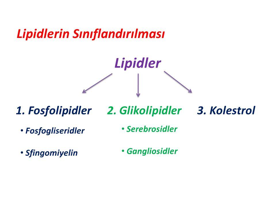 Lipidler Lipidlerin Sınıflandırılması