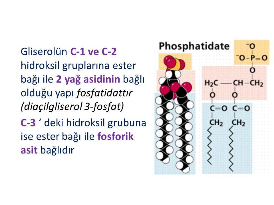 Gliserolün C-1 ve C-2 hidroksil gruplarına ester bağı ile 2 yağ asidinin bağlı olduğu yapı fosfatidattır (diaçilgliserol 3-fosfat)