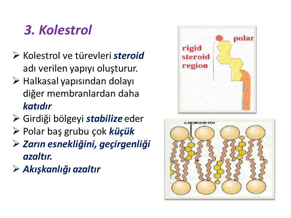 3. Kolestrol Kolestrol ve türevleri steroid adı verilen yapıyı oluşturur. Halkasal yapısından dolayı diğer membranlardan daha katıdır.