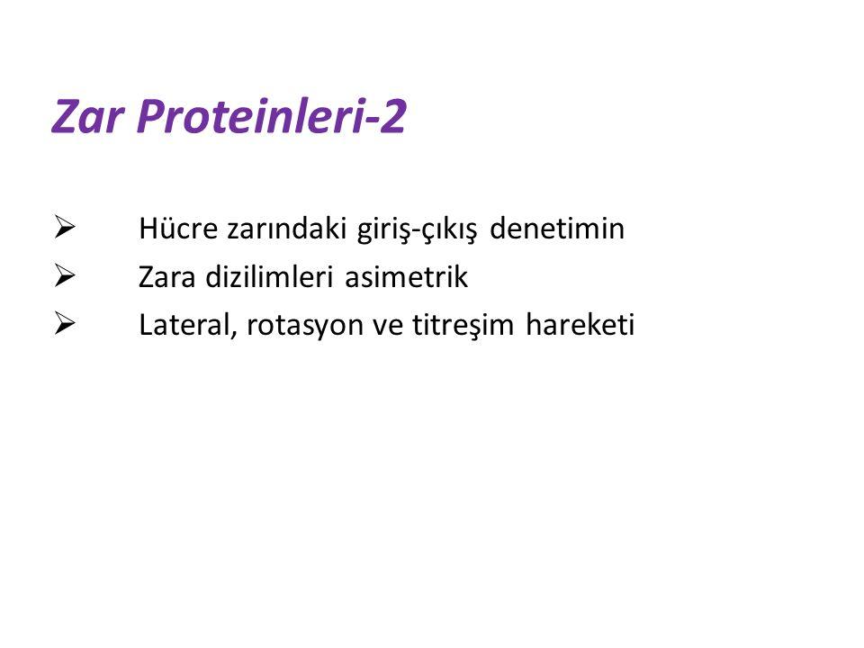Zar Proteinleri-2 Hücre zarındaki giriş-çıkış denetimin