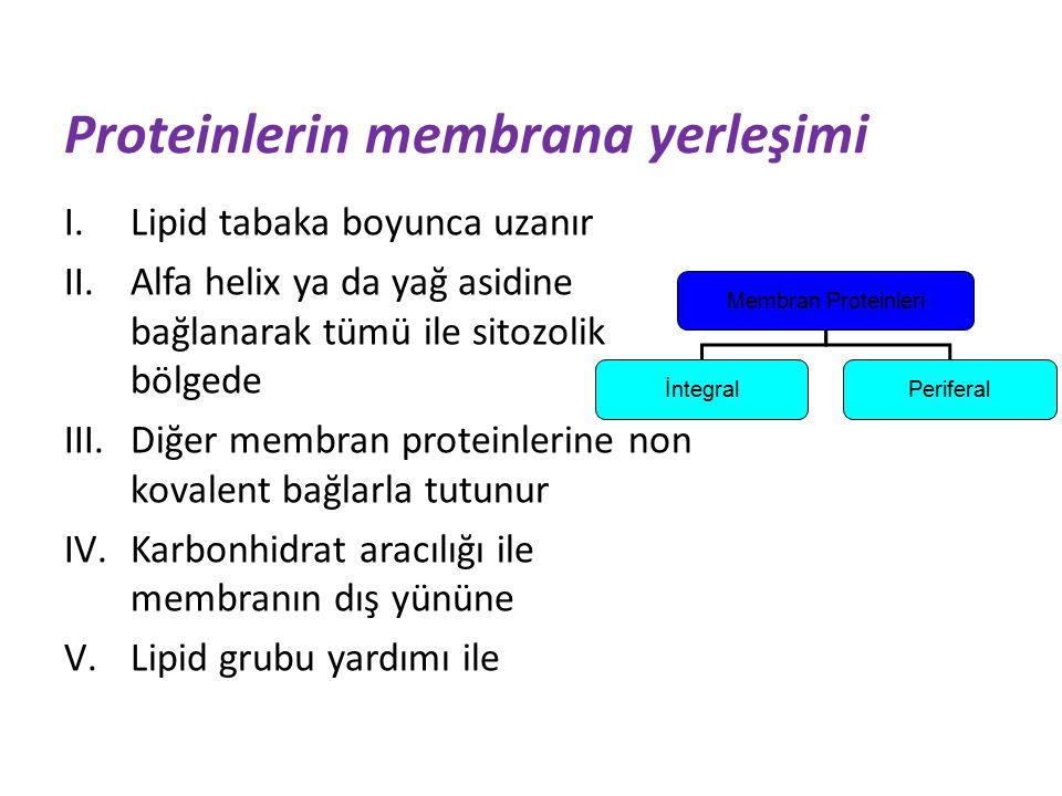 Proteinlerin membrana yerleşimi