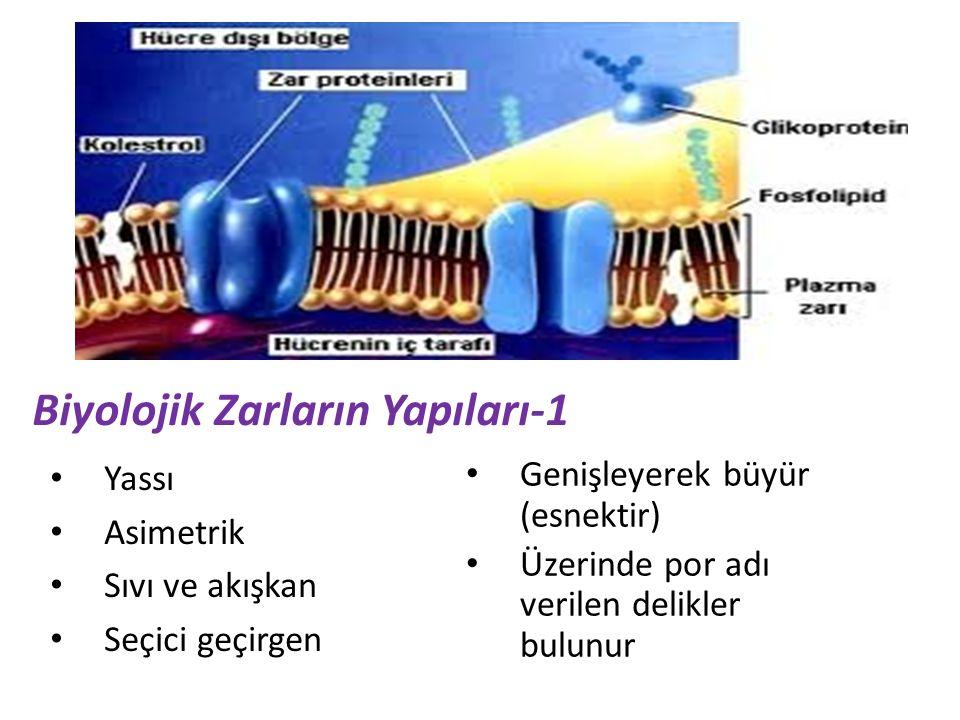 Biyolojik Zarların Yapıları-1