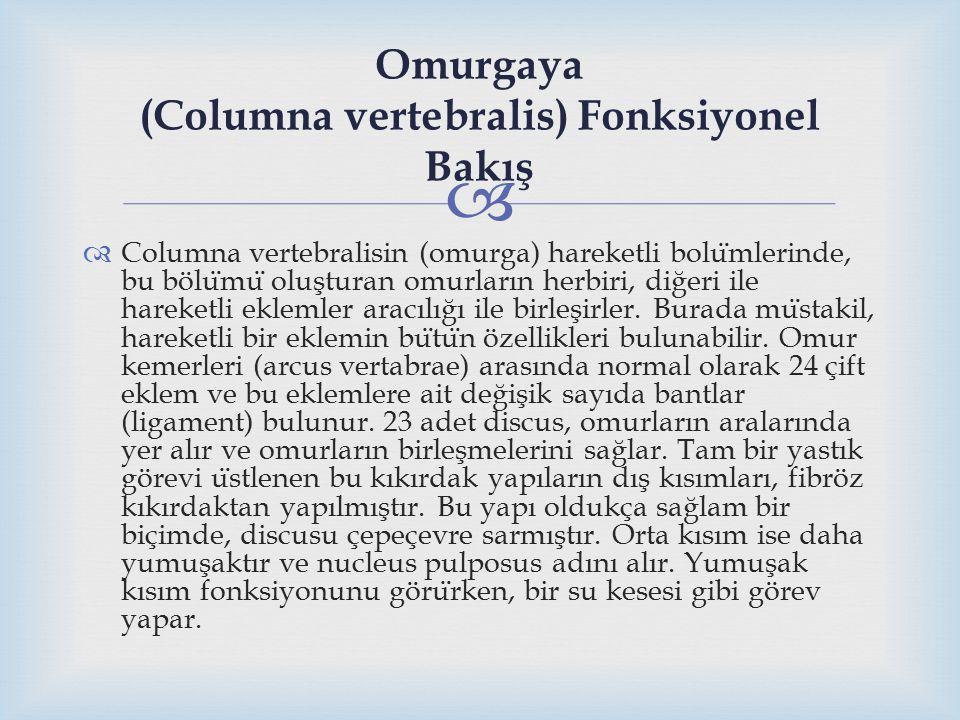 Omurgaya (Columna vertebralis) Fonksiyonel Bakış