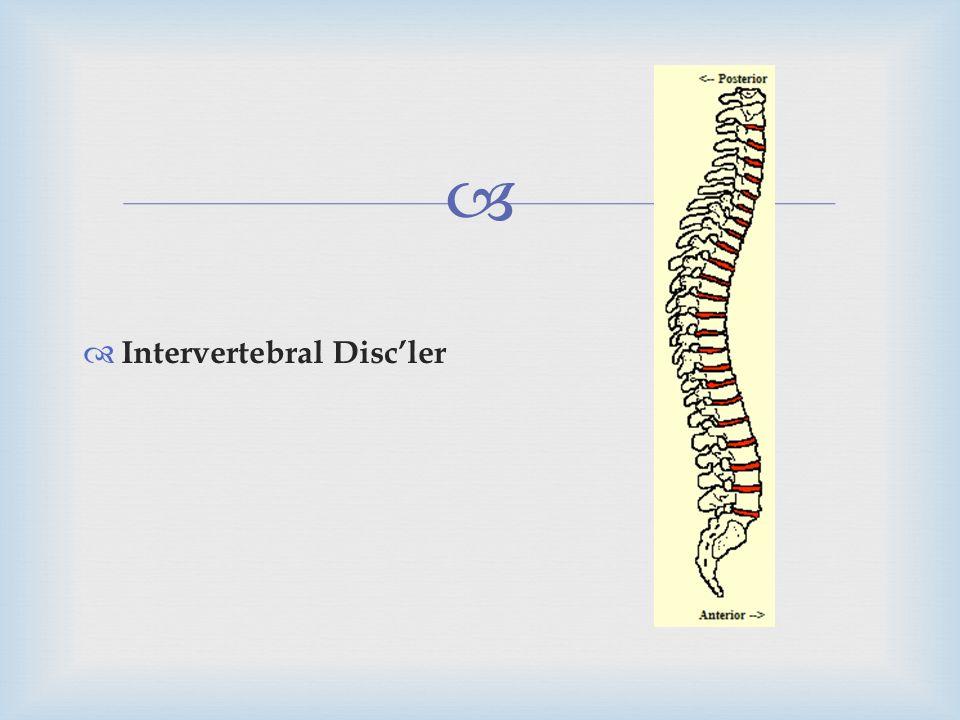 Intervertebral Disc'ler