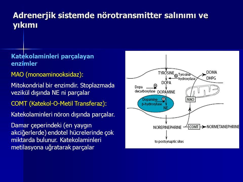 Adrenerjik sistemde nörotransmitter salınımı ve yıkımı