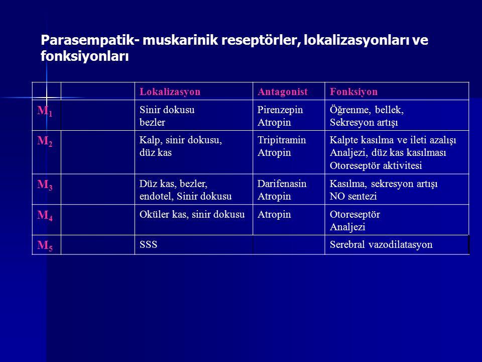 Parasempatik- muskarinik reseptörler, lokalizasyonları ve fonksiyonları