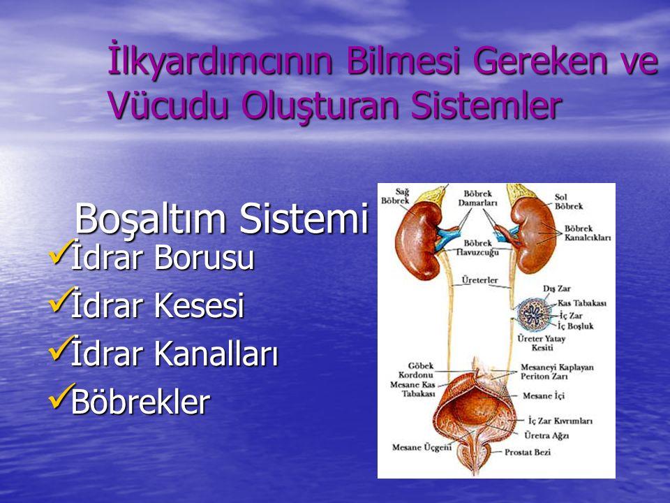 İlkyardımcının Bilmesi Gereken ve Vücudu Oluşturan Sistemler