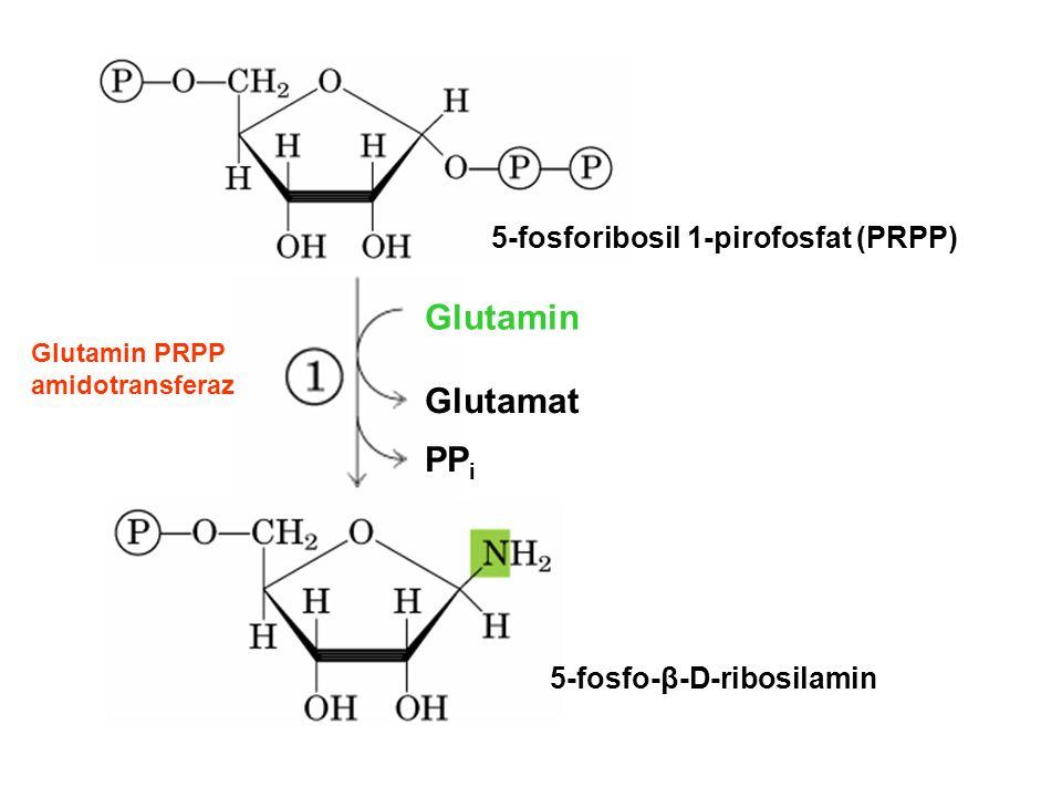 Glutamin Glutamat PPi 5-fosforibosil 1-pirofosfat (PRPP)