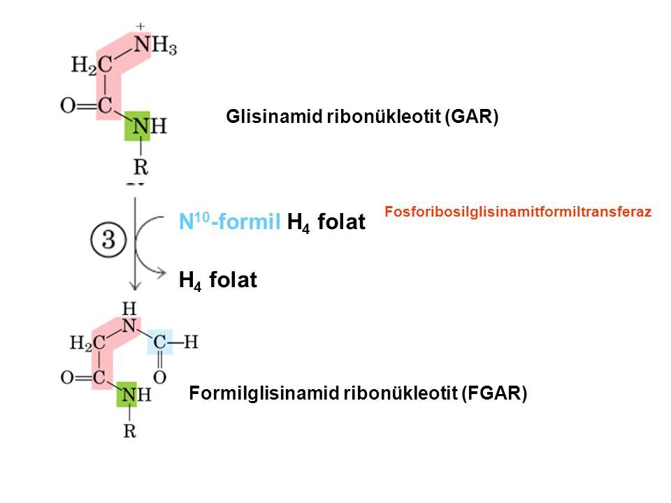 N10-formil H4 folat H4 folat Glisinamid ribonükleotit (GAR)