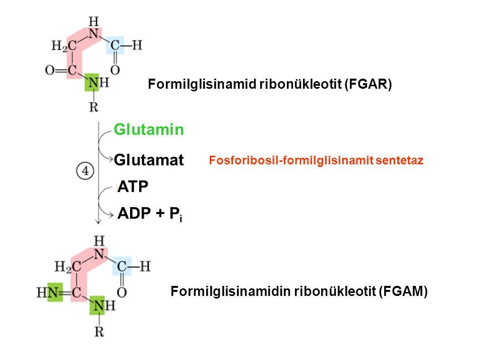 Glutamin Glutamat ATP ADP + Pi Formilglisinamid ribonükleotit (FGAR)