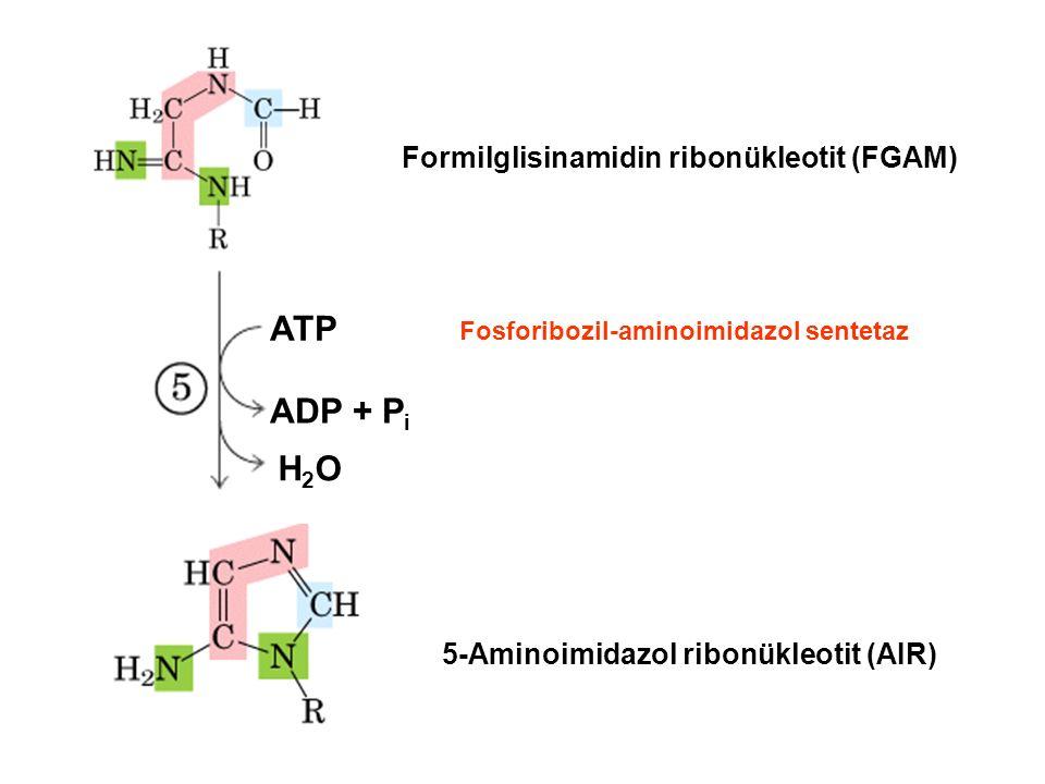 ATP ADP + Pi H2O Formilglisinamidin ribonükleotit (FGAM)