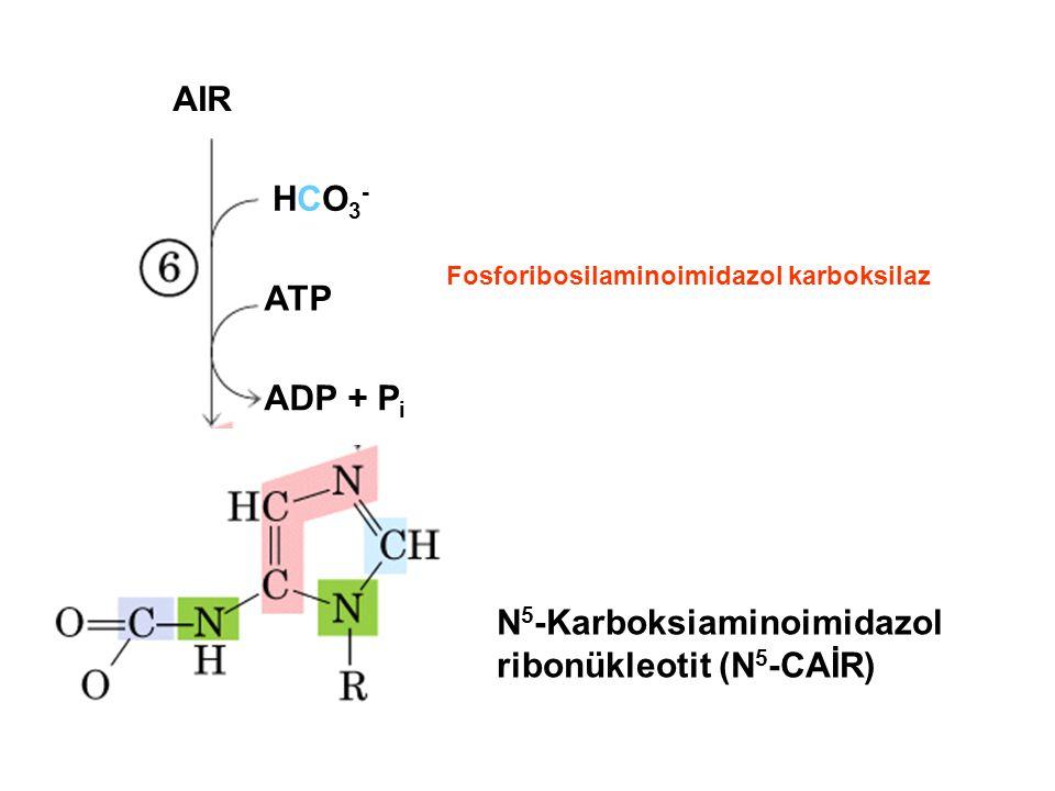 N5-Karboksiaminoimidazol ribonükleotit (N5-CAİR)