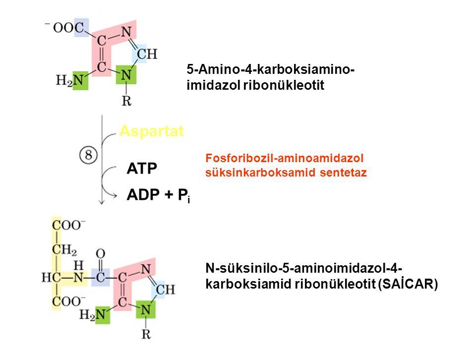 Aspartat ATP ADP + Pi 5-Amino-4-karboksiamino-imidazol ribonükleotit