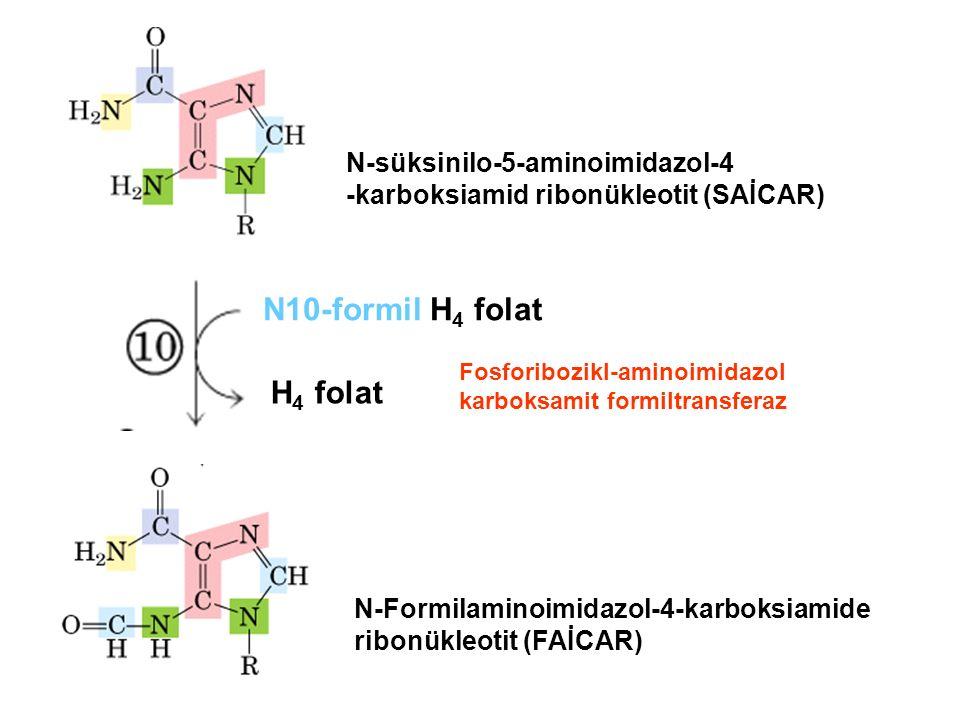 N10-formil H4 folat H4 folat N-süksinilo-5-aminoimidazol-4