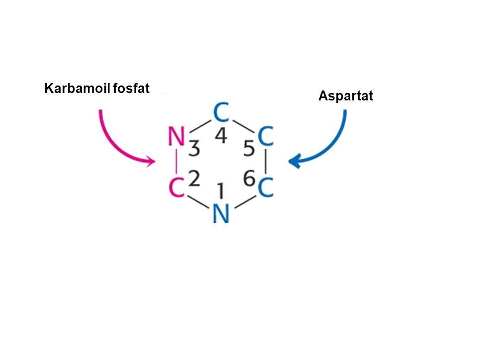 Karbamoil fosfat Aspartat