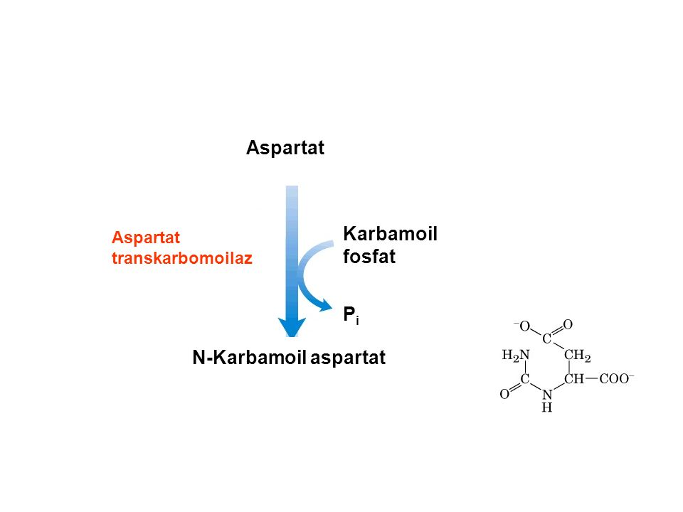 Aspartat Karbamoil fosfat Pi N-Karbamoil aspartat