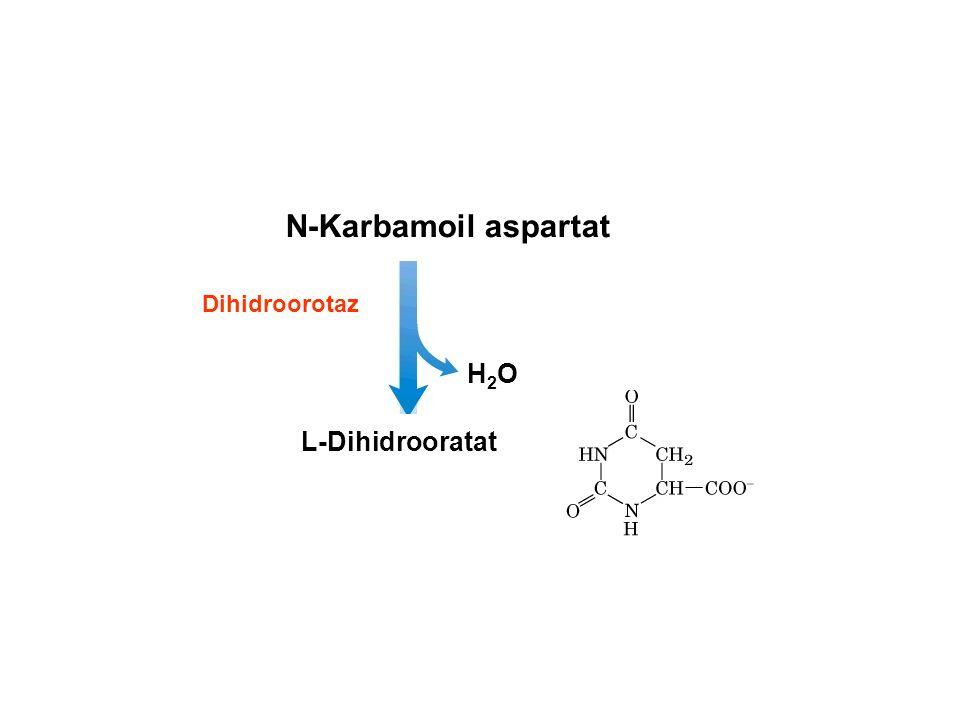 N-Karbamoil aspartat Dihidroorotaz H2O L-Dihidrooratat