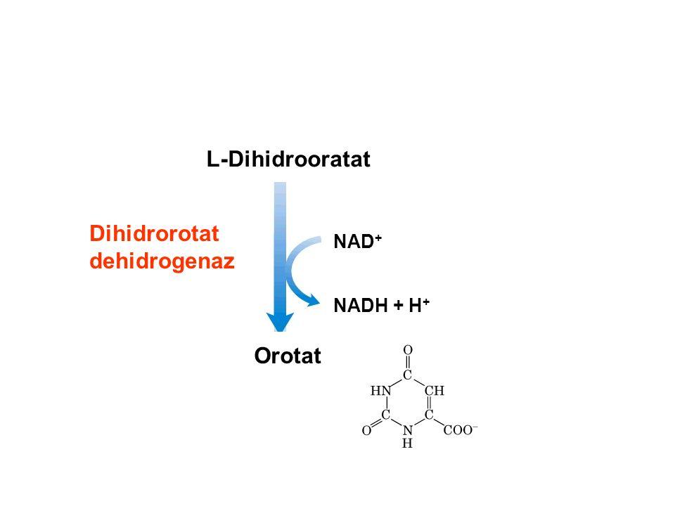 Dihidrorotat dehidrogenaz