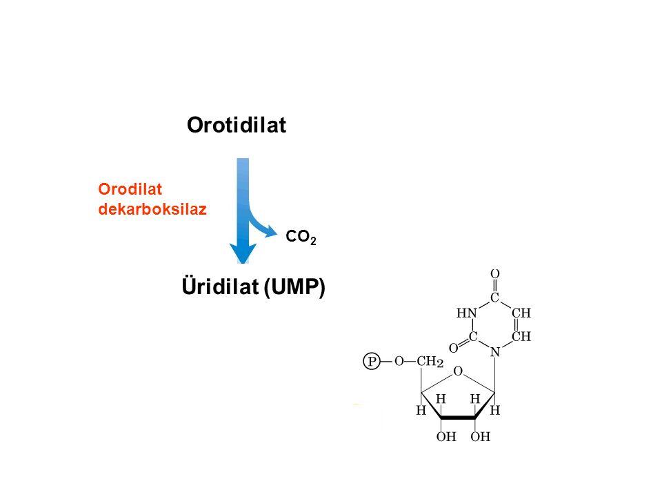 Orotidilat Orodilat dekarboksilaz CO2 Üridilat (UMP)