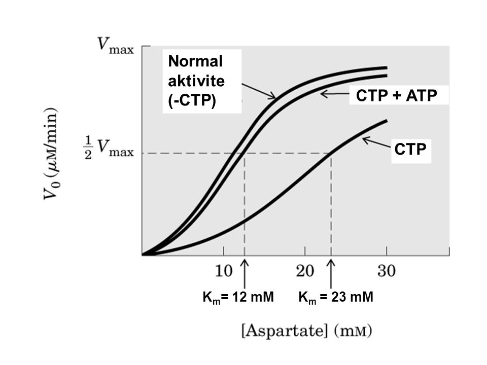 Normal aktivite (-CTP)